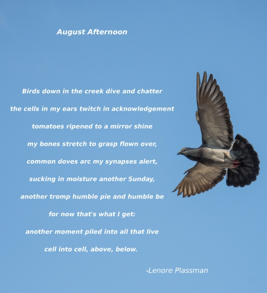 August Afternoon Poem 900
