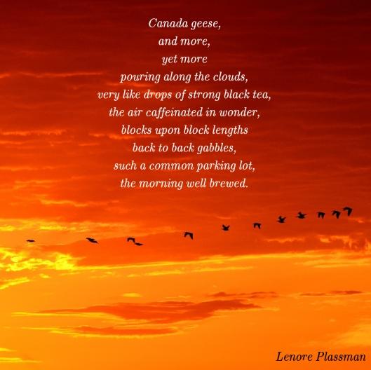 morning geese.jpg