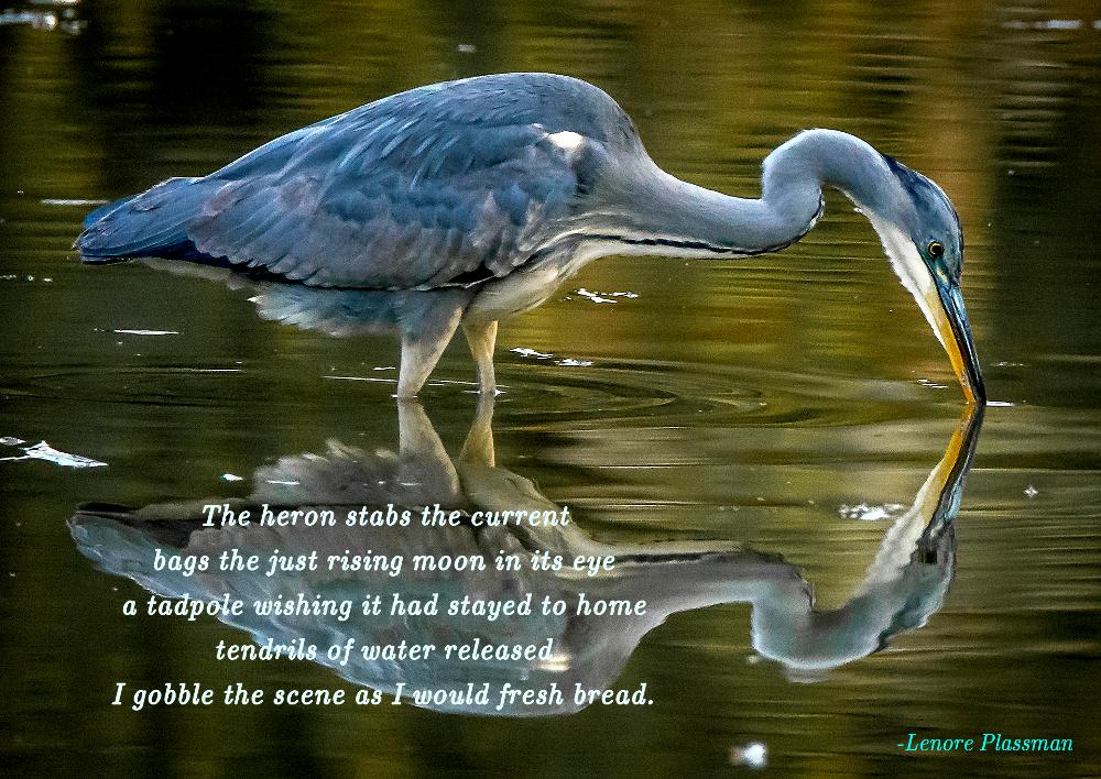 Heron poem 2018 1000.jpg